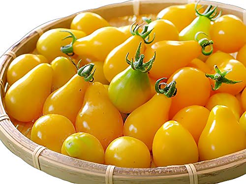 50+ Yellow Pear Tomato Seeds, Heirloom Non-GMO, Low Acid, Indeterminate,...
