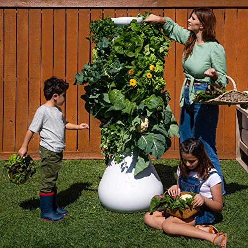 Lettuce Grow 12-Plant Hydroponic Growing System Kit 3'8', Outdoor Indoor...