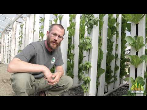 What are the Best Plants for Aquaponics?