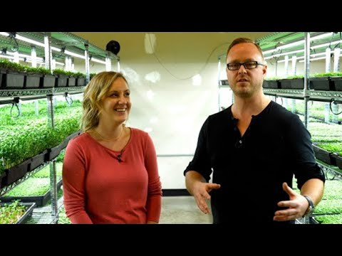 $20,000 a month growing microgreens (Started in a basement!)