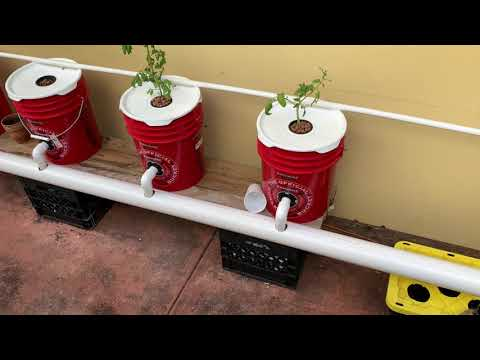 How I Built My DWC System - Recirculating Deep Water Culture - Hydroponic Peppers & Tomatoes EASY