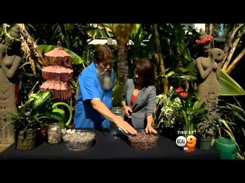In The Garden: Maintaining Perfect Humidity For Plants