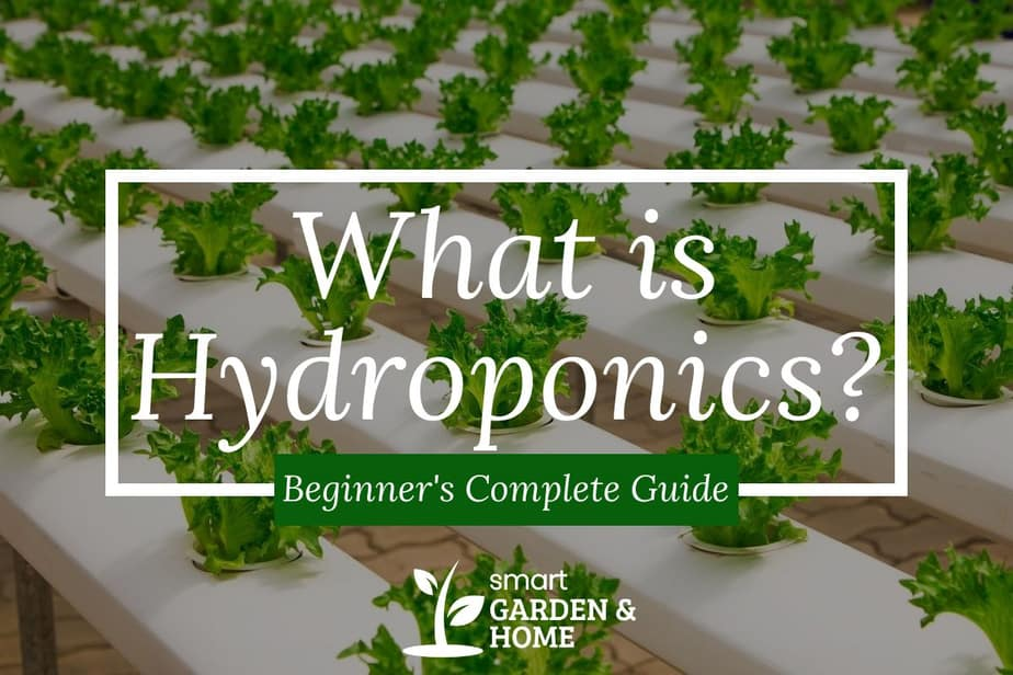 What is Hydroponics? A Beginner's Complete Guide