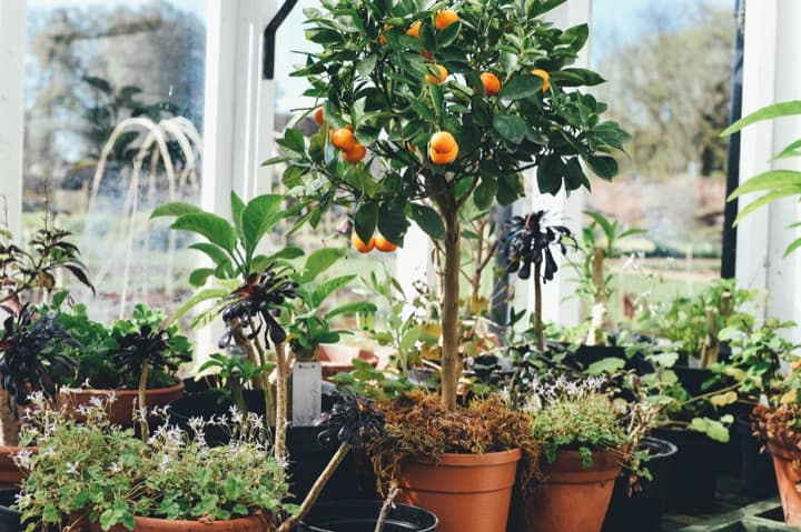 plant pots containers variety citrus tree - Smart Garden & Home