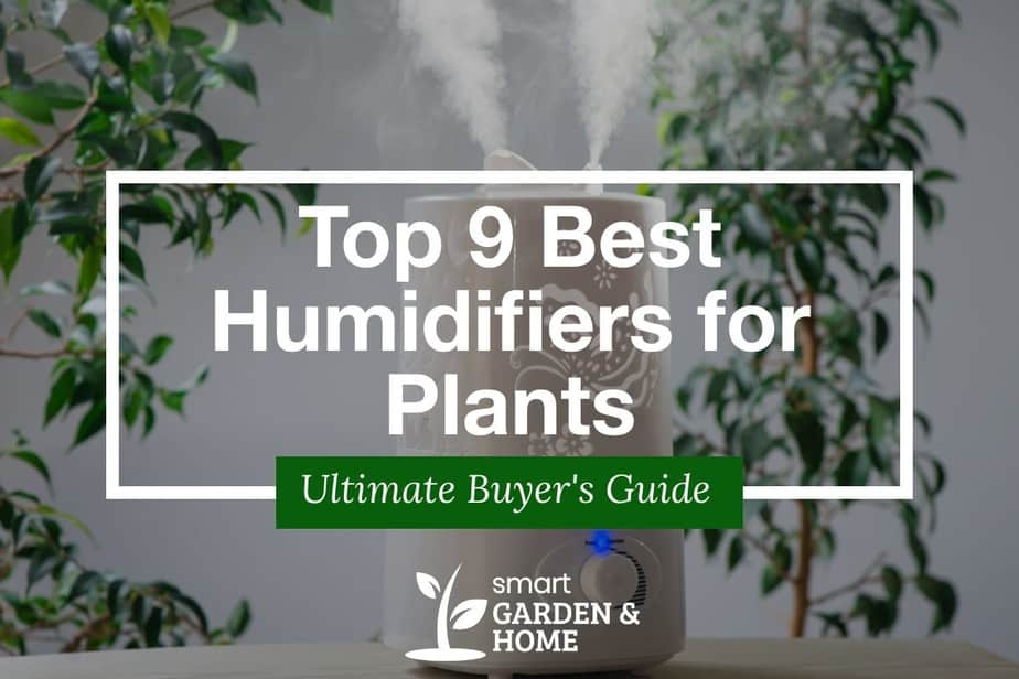 Top 9 Best Humidifiers for Plants and Indoor Gardening