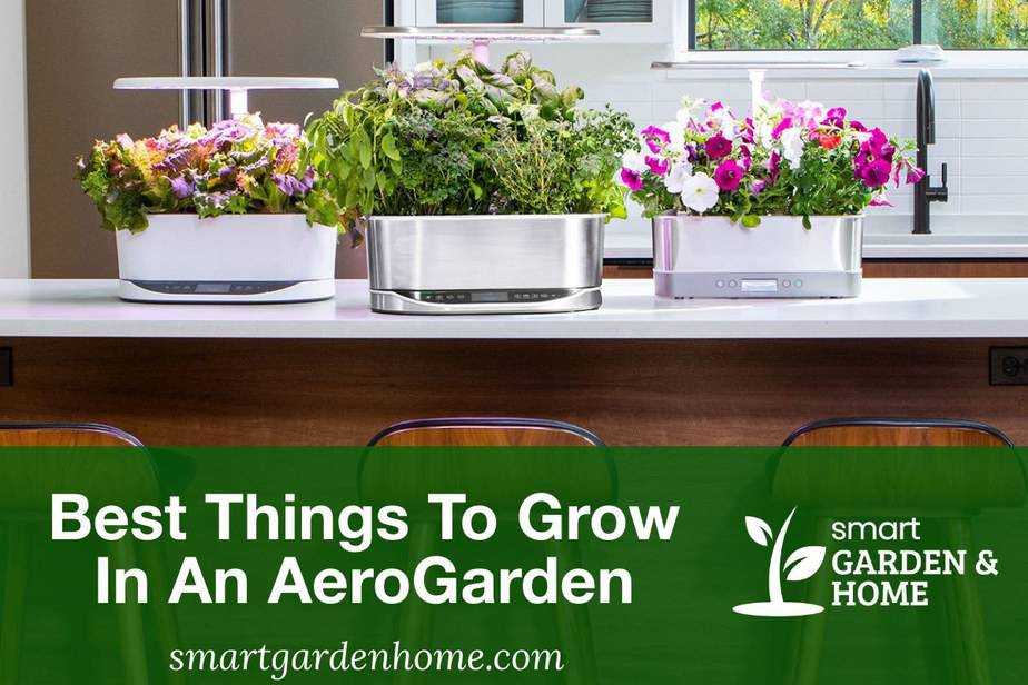 Best Things to Grow in an AeroGarden