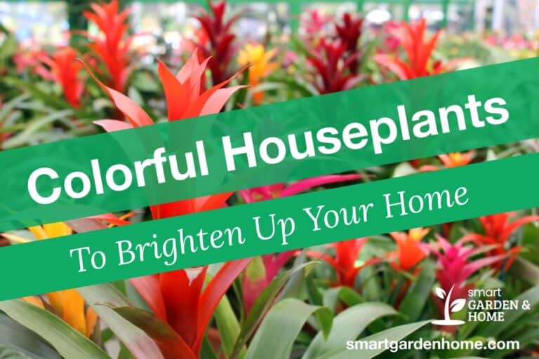 Colorful Houseplants to Brighten Up Your Home
