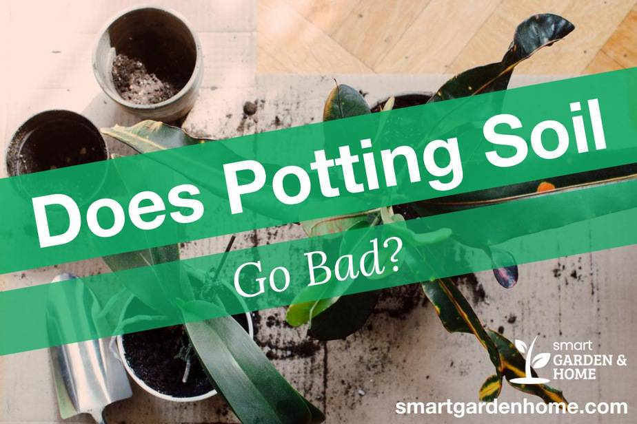 Does Potting Soil Go Bad? How to Reuse and Revitalize Used Potting Soil