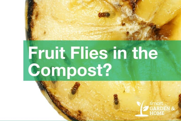 Got Fruit Flies in the Compost Pile?