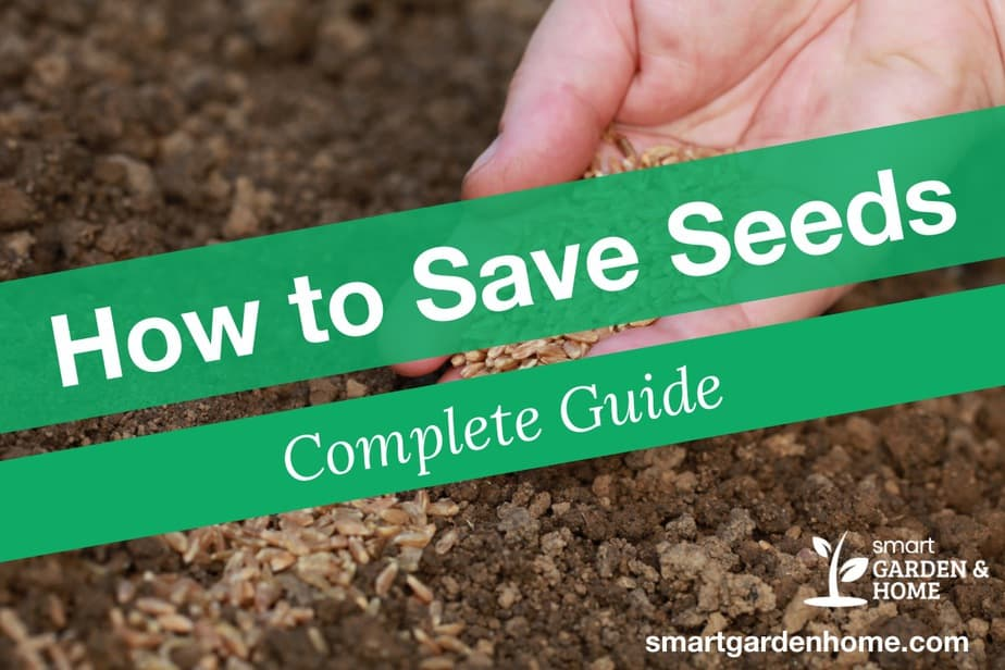 How to Save Seeds - Seed Saving Complete Guide
