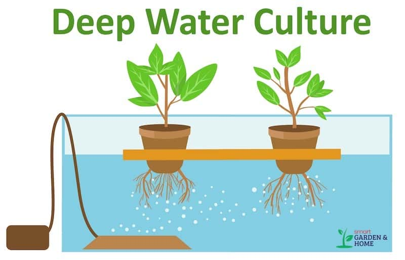 Hydroponic Deep Water Culture System