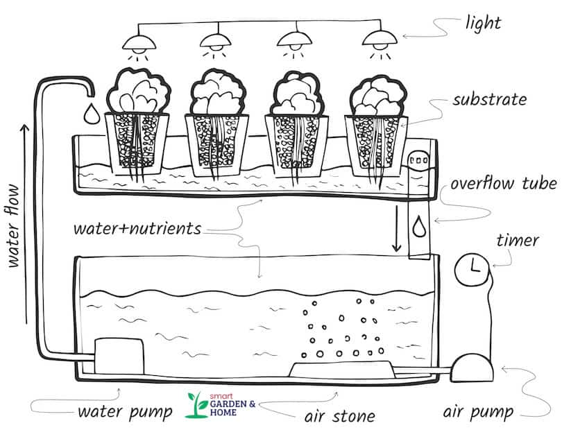 Hydroponic Ebb and Flow System