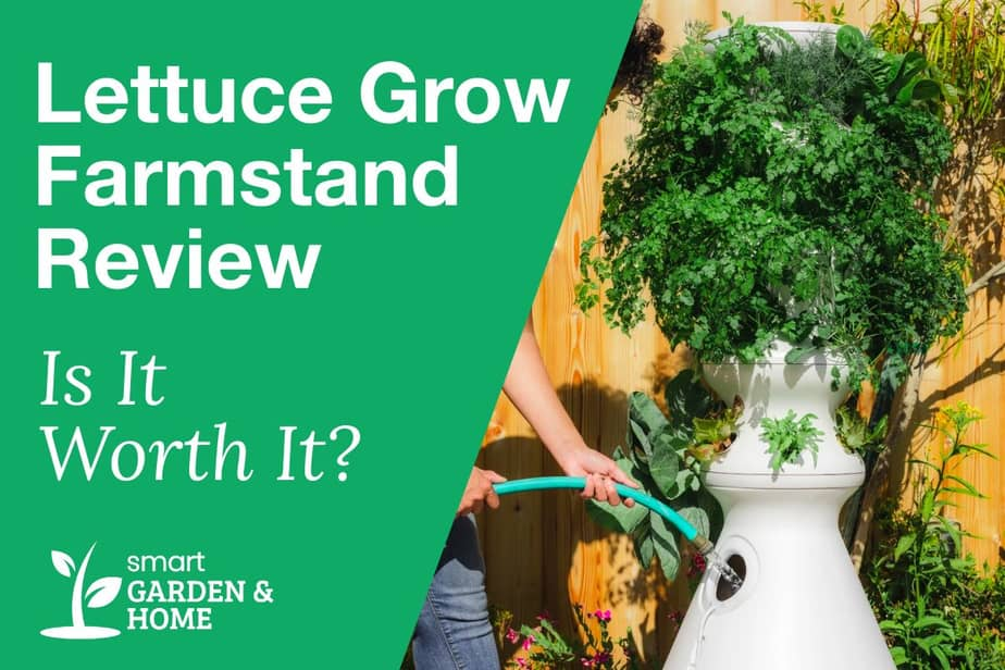 Lettuce Grow Farmstand Review