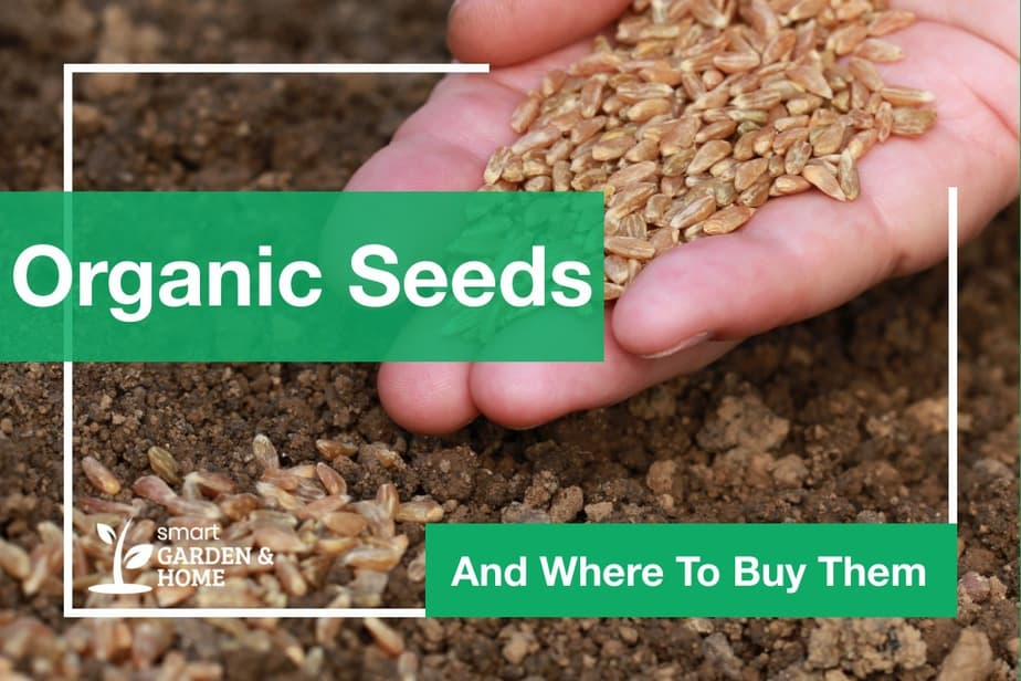 organic seeds and where to buy them | Smart Garden & Home