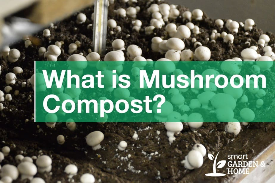 What is Mushroom Compost? What Plants Don't Like it?