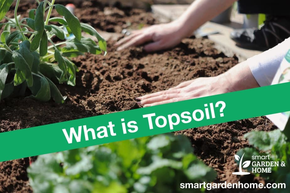 What is Topsoil? Differences from Garden Soil